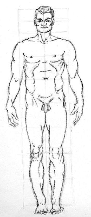 basic proportions, male