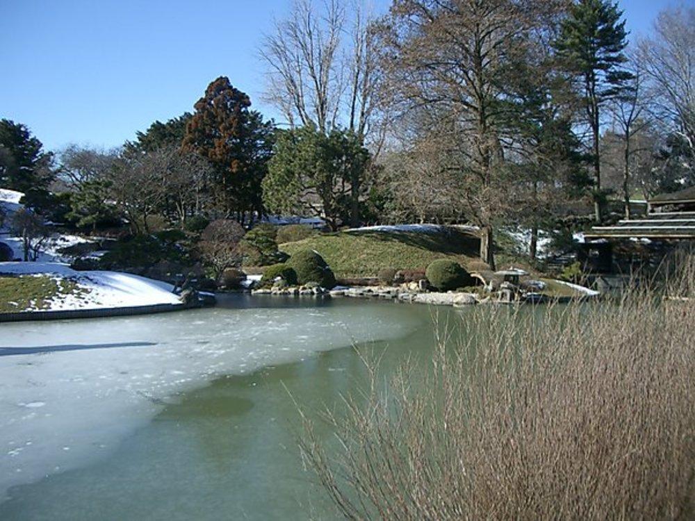 Brooklyn Botanical Gardens, February 2005