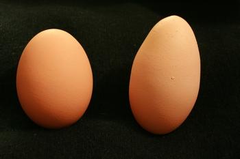 Mutant Egg