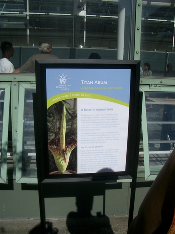 amorphophallus titanum sign