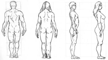 basic proportions, back and side views