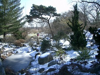 Brooklyn Botanical Gardens, February 2005