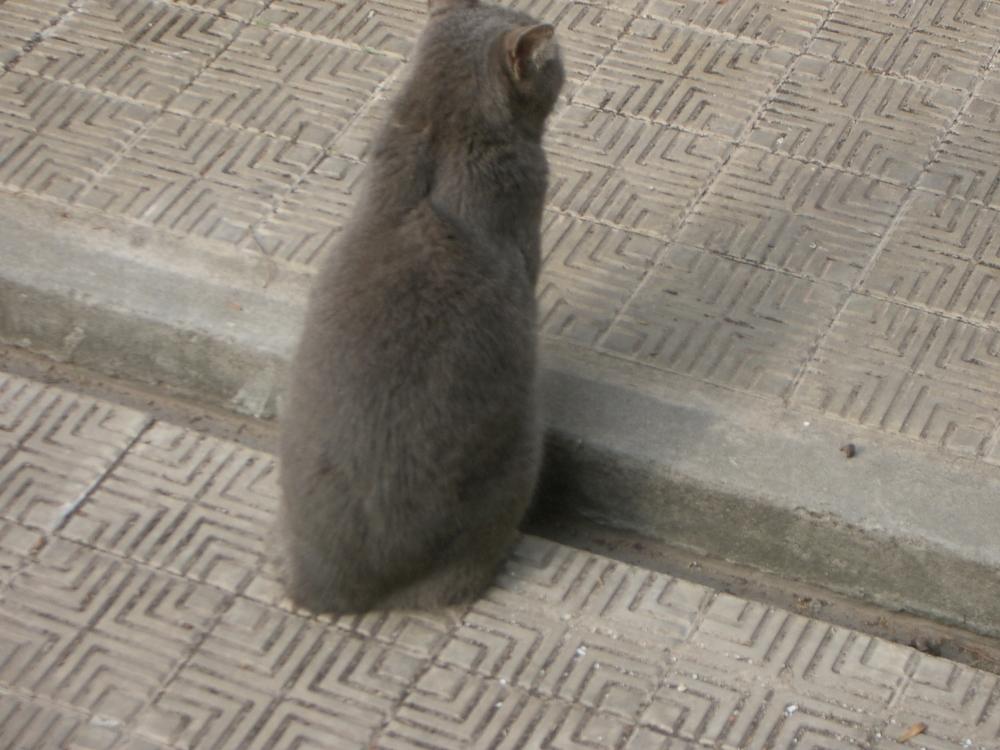 Buenos Aires 2005 - cemetery cat